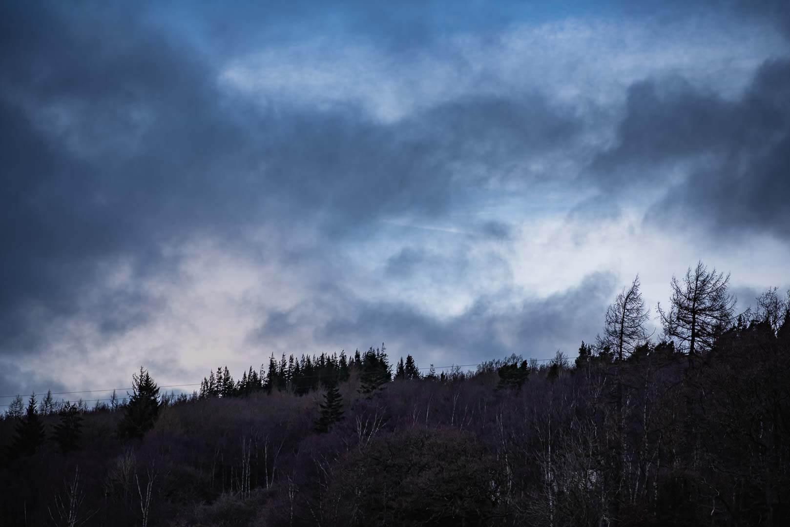 hamsterley forest moody sky